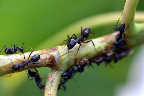 चींटियांकम कर सकती हैंग्रीनहाउस गैसकाउत्सर्जन, जानें कैसे
