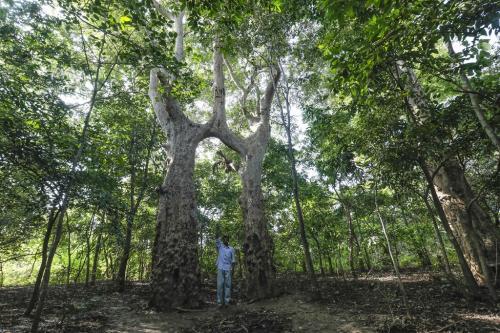 पेड़ों के बीजों को चट कर जाते है कीट, इसलिए बढ़ रहा है तापमान