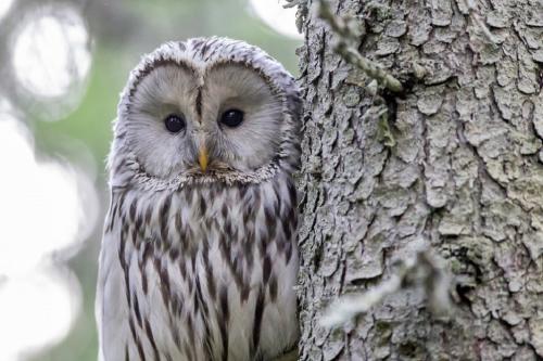 अगले 50 सालों में विलुप्त हो जाएंगी एक तिहाई प्रजातियां, जानें क्यों?