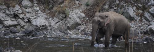 India bats for safekeeping elephant habitats, but is it ready itself?