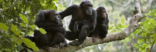 Nut-cracking chimpanzees, elephants reveal animals have intelligent cultures: Expert