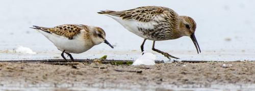 'Urbanisation biggest culprit for decline in India's bird population'