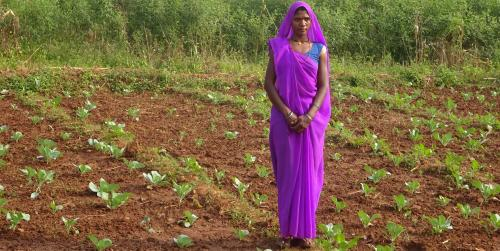 DMF helps Singrauli farmers grow vegetables, earn more