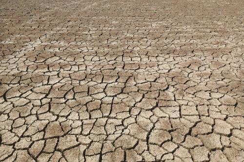 पहली बार परती ही छूट गई मोकामा टाल की 10 हजार एकड़ जमीन, किसान परेशान