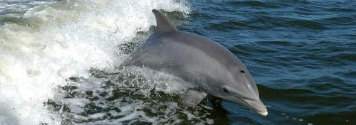 'Gahirmatha dolphins migrated to deep sea due to climate change'