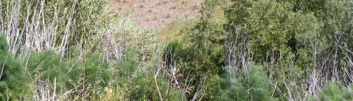 In a first, researchers create framework to eradicate invasive weeds