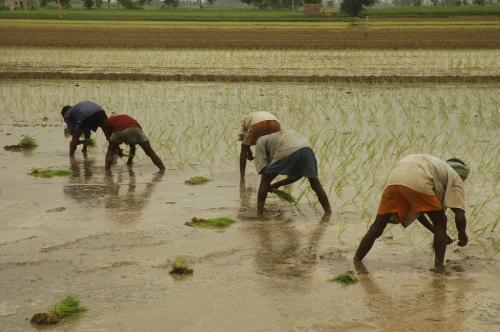 क्यों जरूरी है खेतों तक बिजली पहुंचना?