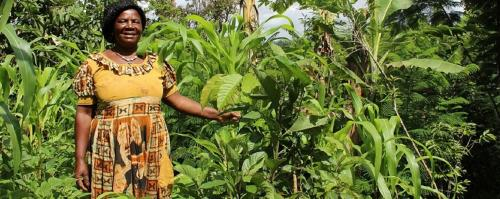 How agroforestry could solve climate crisis