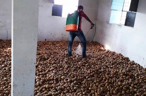 कोरोनावायरस: बिहार में आलू के दाम गिरे, किसानों को नहीं मिल रही कीटनाशक दवा
