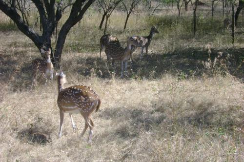 कैग ने पकड़ी राजस्थान के वन एवं पर्यावरण विभाग की खामियां