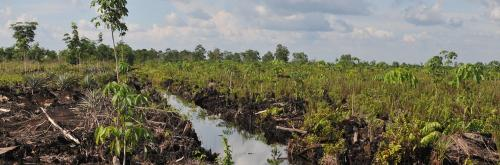 Protecting peatlands can help attain climate goals