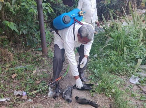 बिहार में स्वाइन फ्लू के 11 मामले, प्रशासन सतर्क
