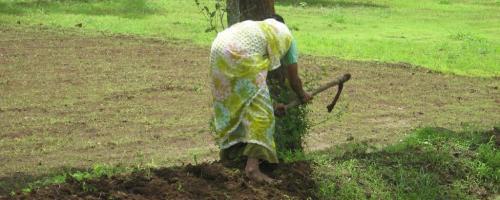 जलशक्ति अभियान की हकीकत:खेत की मेढ़ों से पानी की किल्लत दूर कर रहे महोबा के किसान