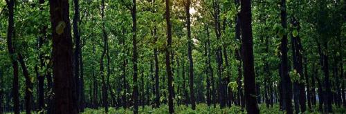 COVID-19: MoEF&CC extends validity of environmental clearances till June 30