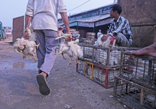 लॉकडाउन में मुर्गियों को नहीं मिल रहा है दाना,1.5 करोड़ मुर्गियों को मारने के लिए मांगी इजाजत