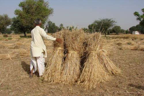 लॉकडाउन ग्रामीण अर्थव्यवस्था: आदेश के बाद भी थ्रेसिंग मशीन नहीं पहुंची राजस्थान
