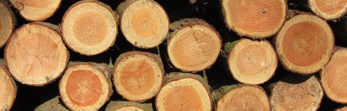 COVID-19: Timber export from Africa takes a hit, says report