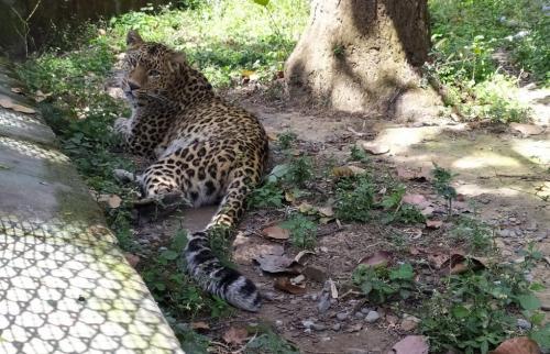 कोरोना के साथ वन्यजीवों को शिकार से बचाने की भी चुनौती बढ़ी