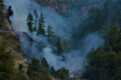 जंगलों में आग लगनी शुरू, लेकिन लॉकडाउन की वजह से कर्मचारी नहीं हुए तैनात
