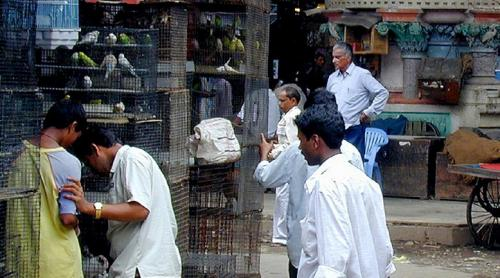 COVID-19: Shut pet markets, animal protection organisation urges PM