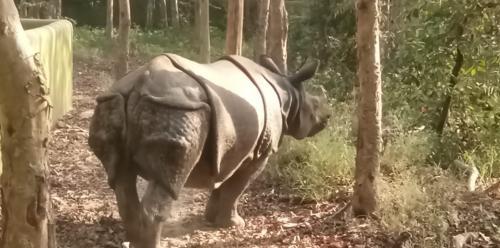 Amid gloom of COVID-19, rhino breeding centre begins at Patna zoo