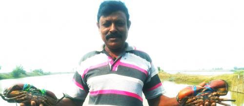 COVID-19 lockdown hits crab farming in coastal Odisha