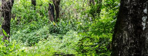 How can India overcome policy and institutional gaps in forest management