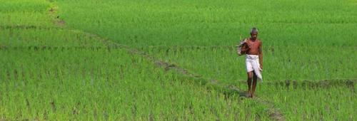 Untimely rains wreak havoc on rabi crops in Bihar