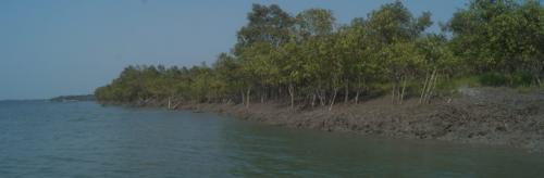 COVID-19, bad weather affect livelihoods in Bengal's Sundarbans
