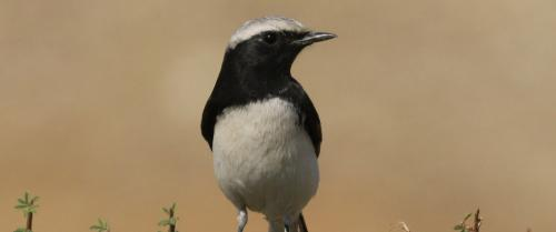 A bird, its photographs and a serendipitous discovery