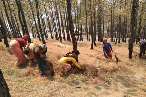 क्यों कम हो रही हैं उत्तराखंड के जंगलों में आग लगने की घटनाएं?