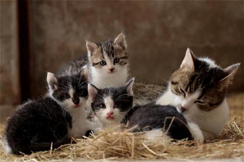 बिल्लियां कोविड -19 से संक्रमित हो सकती हैं और अन्य में भी संक्रमण फैला सकती हैं: रिसर्च