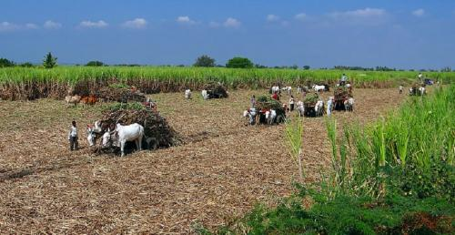 COVID-19: Sitharaman's 'agri bouquet' does not cut ice with farm experts