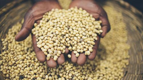 Re-imagining food systems crucial for climate, economic resilience: Nutrition report