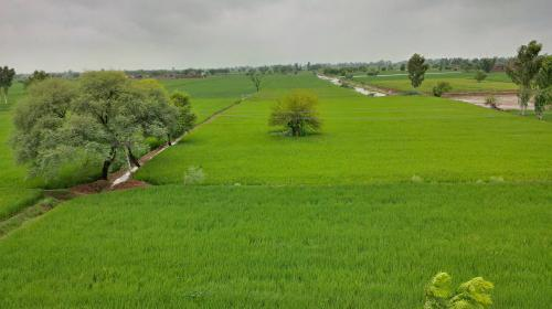 COVID-19: Reverse migration sparks concern for Punjab's paddy season