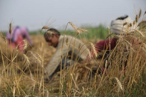 Future of Indian agriculture and small farmers: Role of policy, regulation and farmer agency