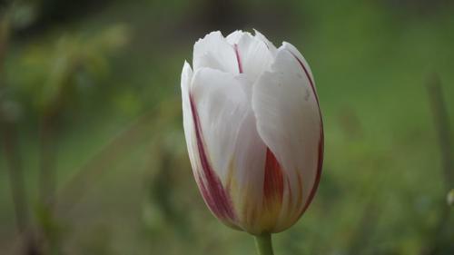 लुप्त होती प्रजातियों को सहेजने में जुटा उत्तराखंड वन विभाग