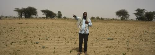 Tracking locust attack: Cotton crop spread over 700 hectares destroyed in Bikaner
