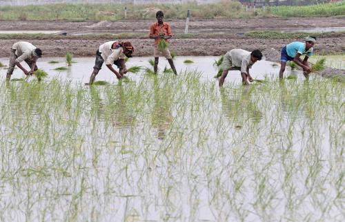 हरियाणा सरकार ने हटाई धान की खेती पर पाबंदी