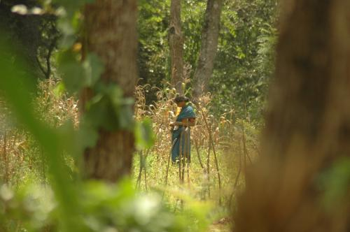 छत्तीसगढ़: वन विभाग अब नहीं होगा नोडल एजेंसी