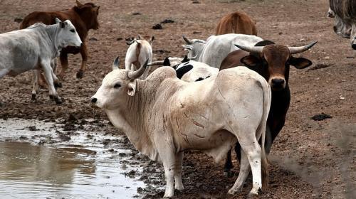 Organic livestock farming: A revolution in the making