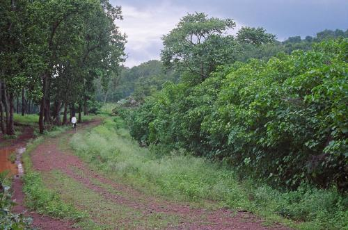 Tribal ministry panels draft fresh guidelines for community forest, habitat rights