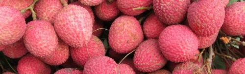 Litchi harvest in Bihar affected due to unusual weather, say scientists