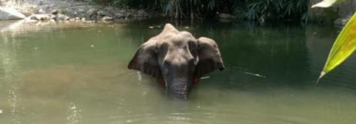 Pregnant elephant's death in Kerala shows institutional indifference to wild animals