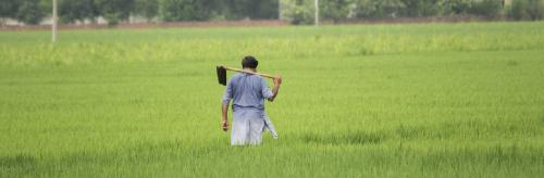 Punjab bats for direct seeding of rice. But will it help farmers?