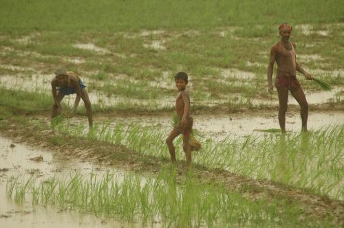 कोविड-19: जीडीपी में आ सकती है 25% गिरावट, लेकिन कृषि में 3% वृद्धि: रिपोर्ट