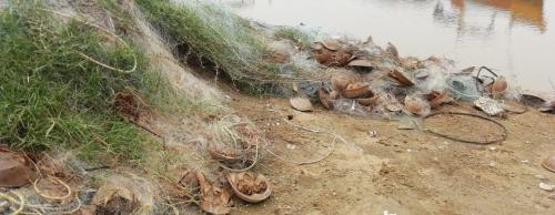 International Horseshoe Crab Day: Species under grave threat in Odisha