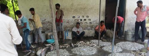 River pollution, conservation: UP's fishing community bears brunt