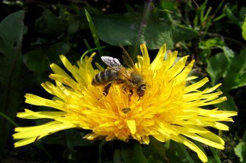 पॉलिनेटर वीकः मधुमक्खियों और तितलियों का बचा रहना है बेहद जरूरी