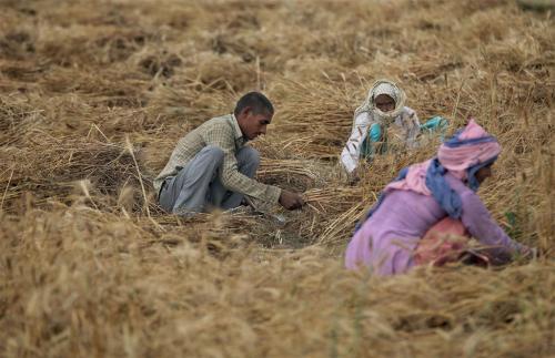 भारी बारिश बन रही है किसानों के लिए नुकसान का सबब